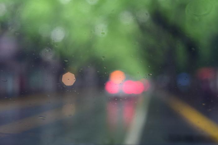 tree road